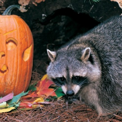 Top 5 Best Activities at ZooAmerica Creatures Of The Night