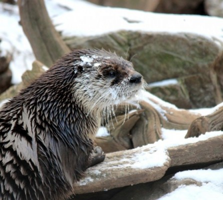Winter Weather Fun at ZooAmerica