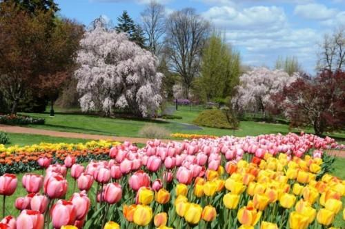 Hershey Gardens Gears Up for Tulip-Palooza!