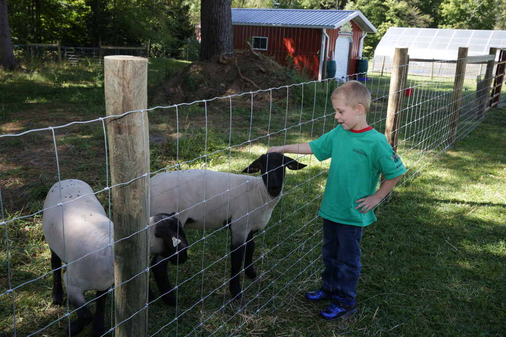 Boy petting Sheep
