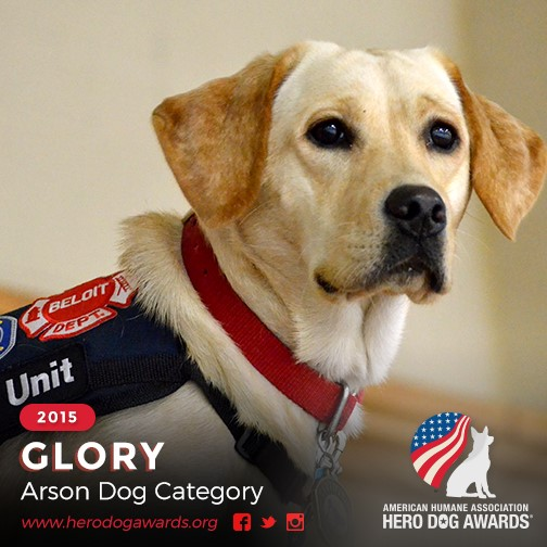 Arson Dog Glory in working uniform