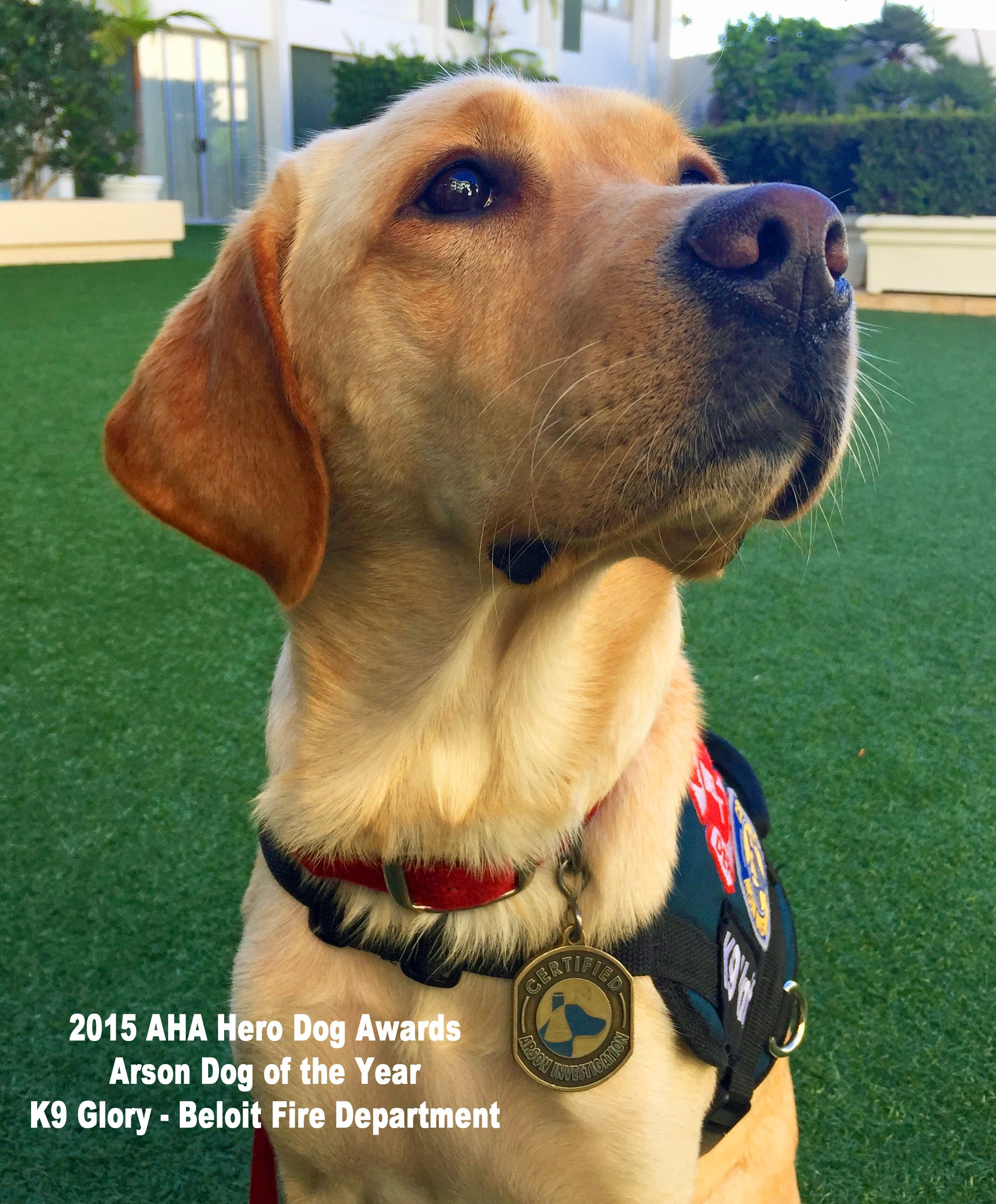 Arson dog Glory