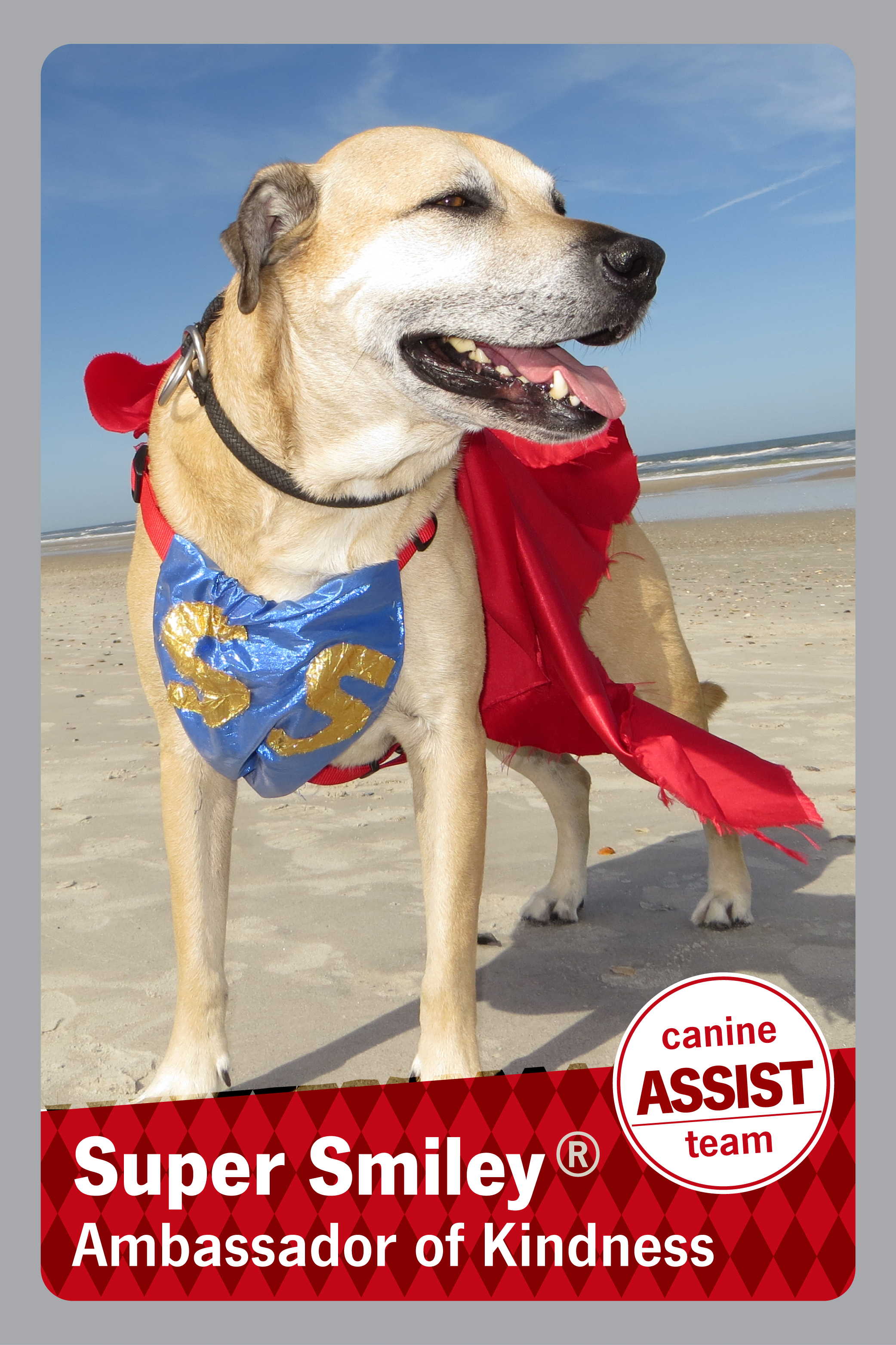 Picture of a dog with a cape on and the caption Super Smiley the ambassador of kindness