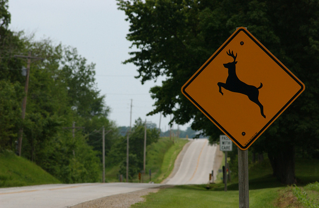 image of a country road with a deer crossing sign