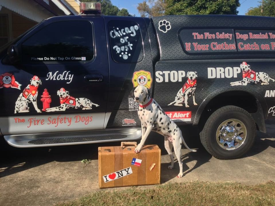 All packed and ready to go! Molly the Fire Safety Dog has a busy travel schedule.