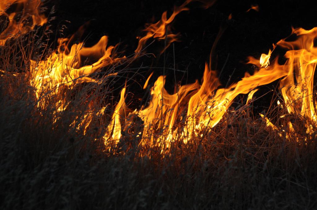 Burning wild grass