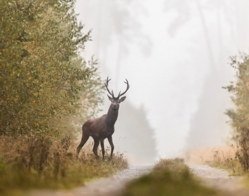 Deer standing next to road