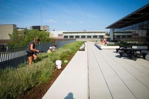 A photo of Mohawk's pollinator garden on the roof of H Wing.