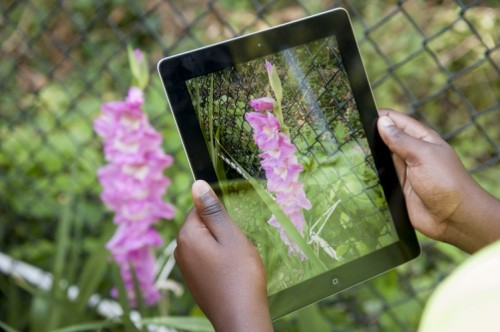 National Geographic Labs: Technology and Innovation for a ...