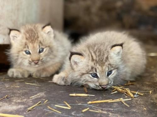 ZooAmerica Welcomes New Animals in Summer 2021