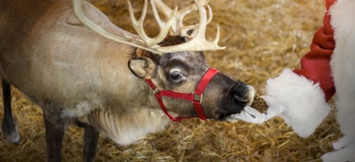 See All of Santa's Reindeer at Christmas Candylane