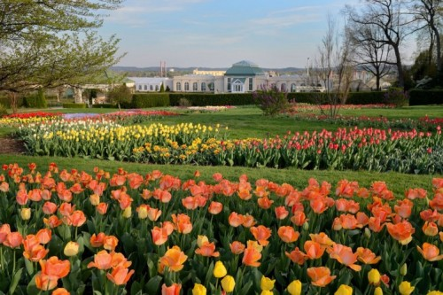 Tulip-Palooza at Hershey Gardens Slated to Spring Up Soon!