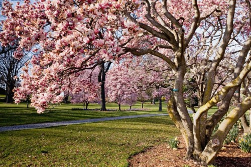 Step into spring at Hershey Gardens