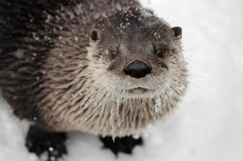 Top 4 Active Animals at ZooAmerica in Winter