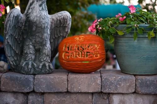 Pumpkin Glow Lights Up Hershey Gardens