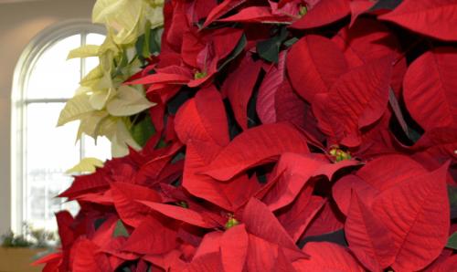 Holiday Happenings at Hershey Gardens: 2020