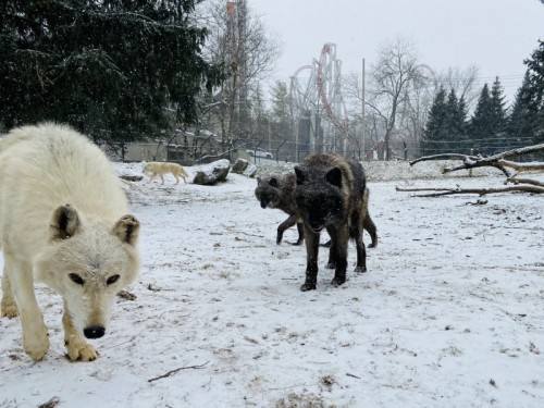PHOTOS: Snow Day 2021 at ZooAmerica