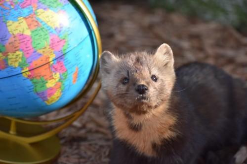 ZooAmerica North American Wildlife Park Celebrates Earth Day 2021