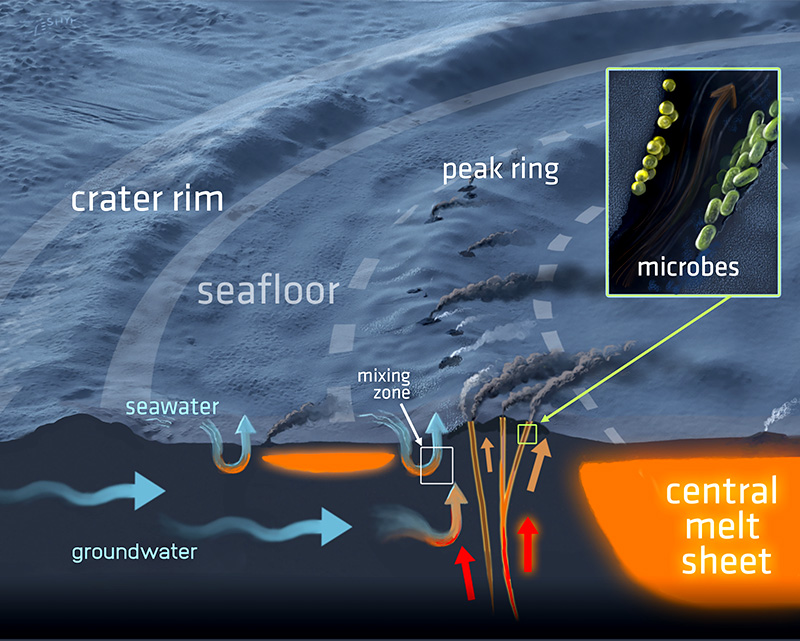 A three-dimensional cross-section of the hydrothermal system in the Chicxulub impact crater and its seafloor vents. The system has the potential for harboring microbial life. Illustration by Victor O. Leshyk for the Lunar and Planetary Institute.