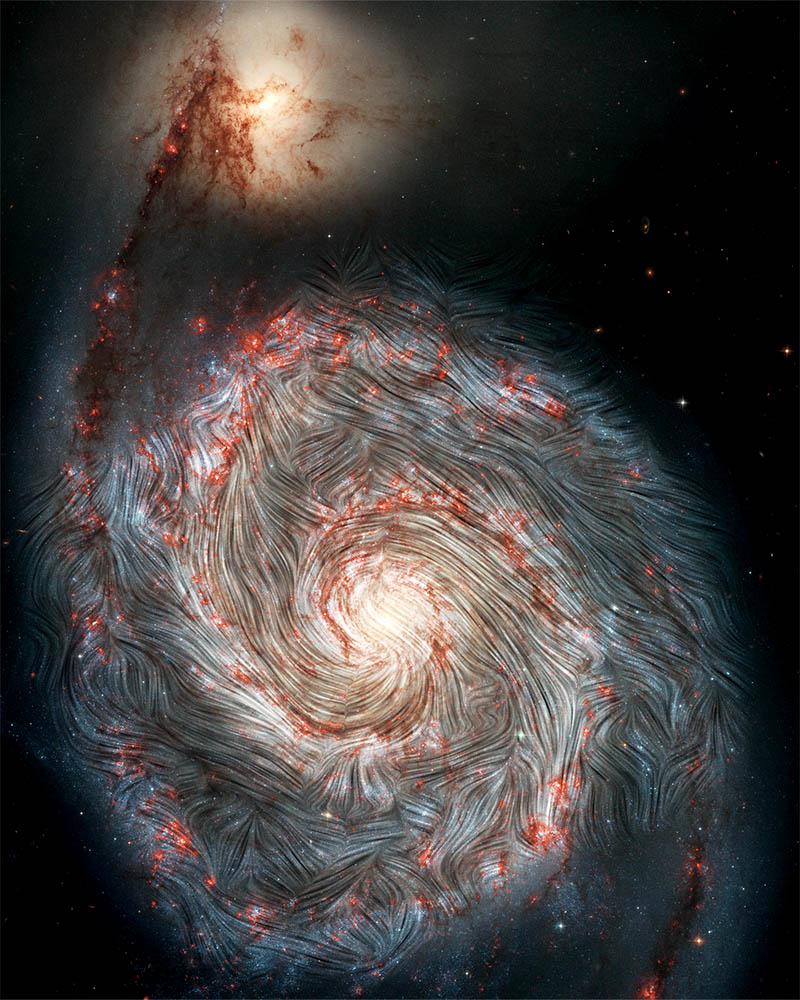 Magnetic field streamlines detected by SOFIA are shown over an image of the Whirlpool galaxy, M51, from NASA's Hubble Space Telescope. For the first time, SOFIA's infrared view shows that the magnetic fields in the outer arms do not follow the galaxy's spiral shape and are instead distorted. The intense star formation activity in theses regions, shown in red, may be causing the chaos, along with the forces from neighboring galaxy, NGC 5195, tugging on one of the spiral arms. Credit: NASA, the SOFIA science team, A. Borlaff; NASA, ESA, S. Beckwith (STScI) and the Hubble Heritage Team (STScI/AURA)