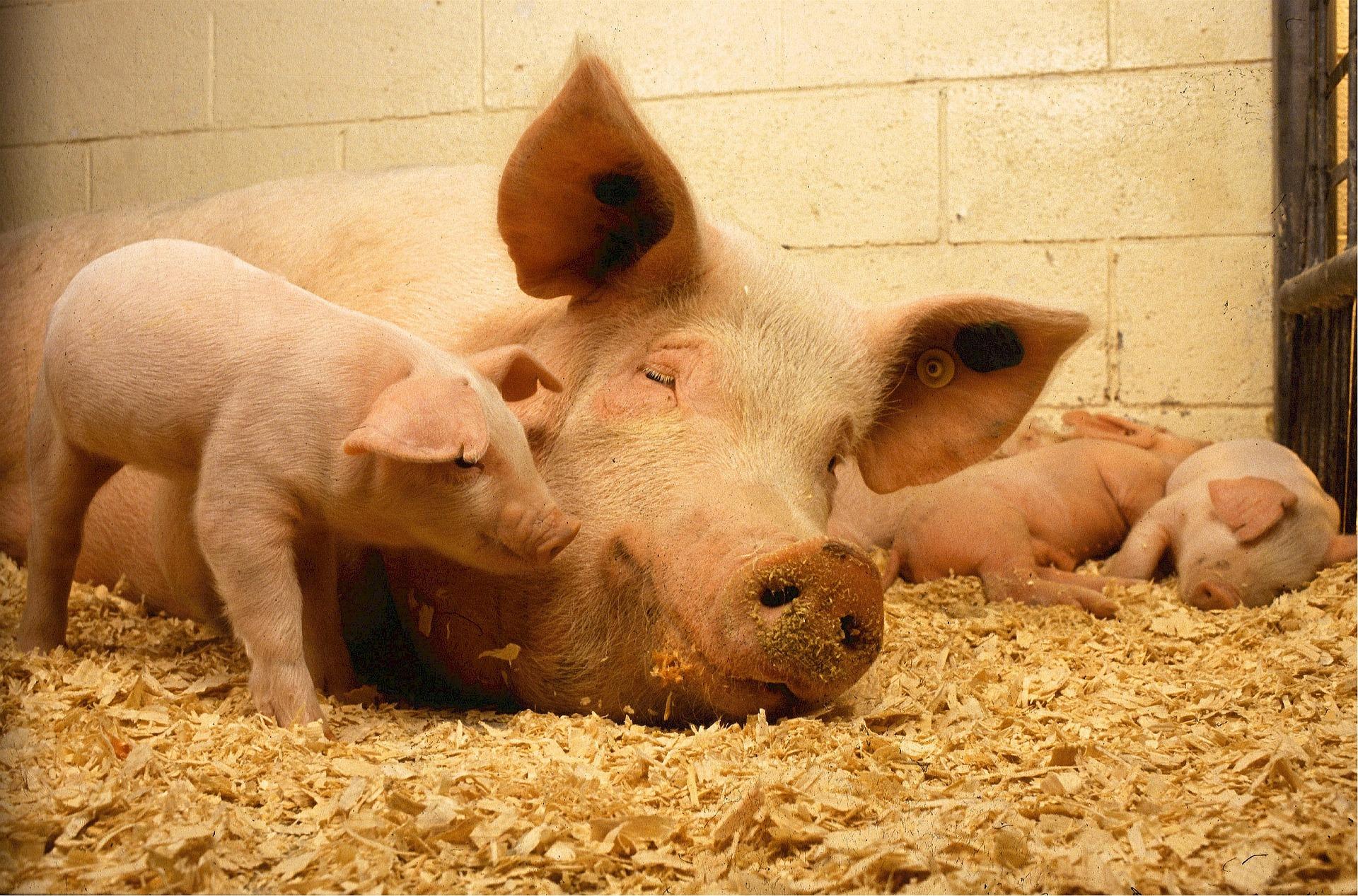 Verdienmodel vlees gaat niet zo snel overboord.