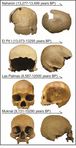 The four skulls analyzed in this study. Photos: Alejandro Terrazas Mata