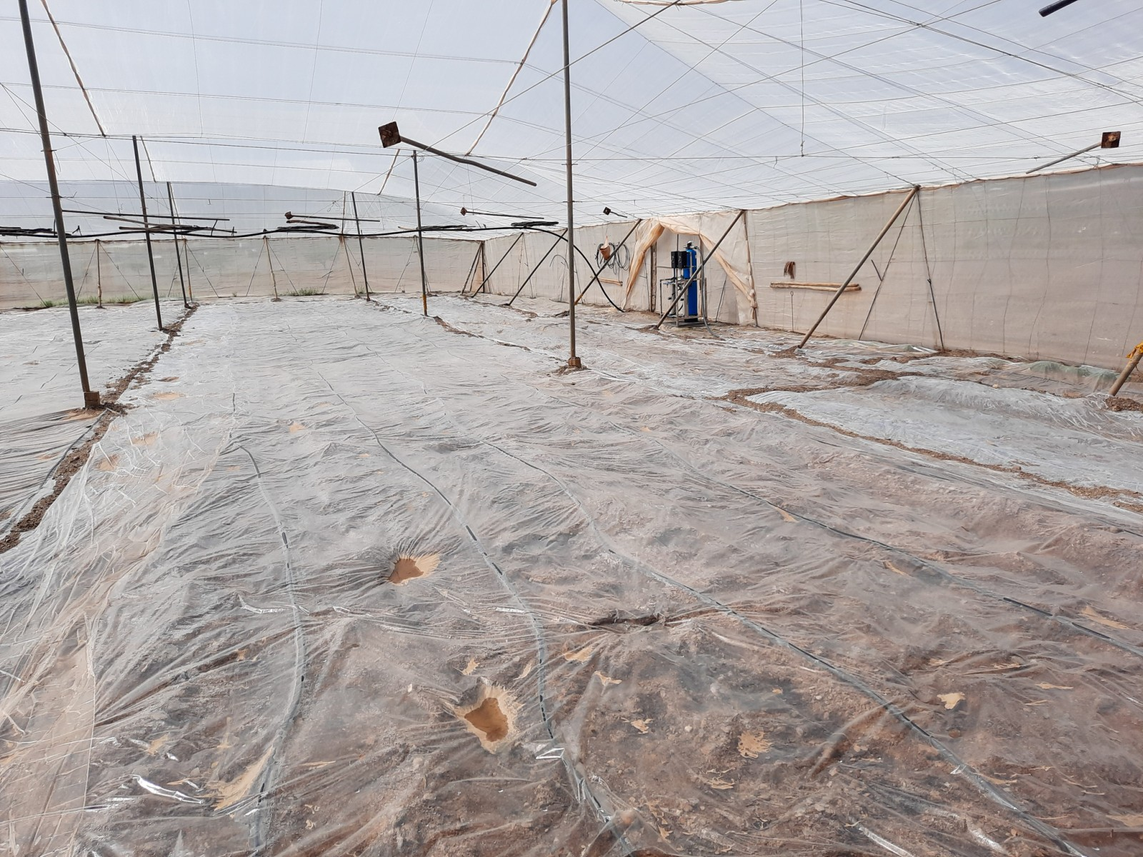 Photo by Fulgencio - Inside the greenhouse where transparent plastics are placed on the floor